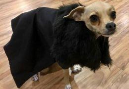 Marca lança roupas inspiradas em Game of Thrones para cães