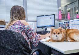 Pesquisa: 9 em cada 10 pessoas querem cachorros no ambiente de trabalho