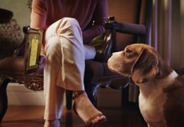 Rede de pet shops lança sistema para cachorro fazer compras online