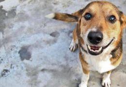 4 vantagens de adotar cães adultos