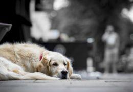 Cachorro anda mais de 7 km em linha de metrô no Rio de Janeiro