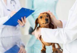 Dicas para escolhe rum plano de saúde para seu pet