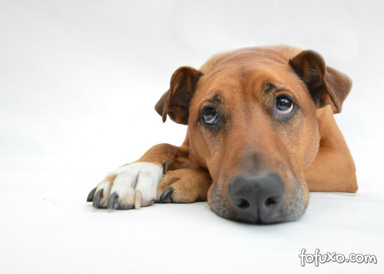 Site da spoilers sobre morte de cachorros em filmes