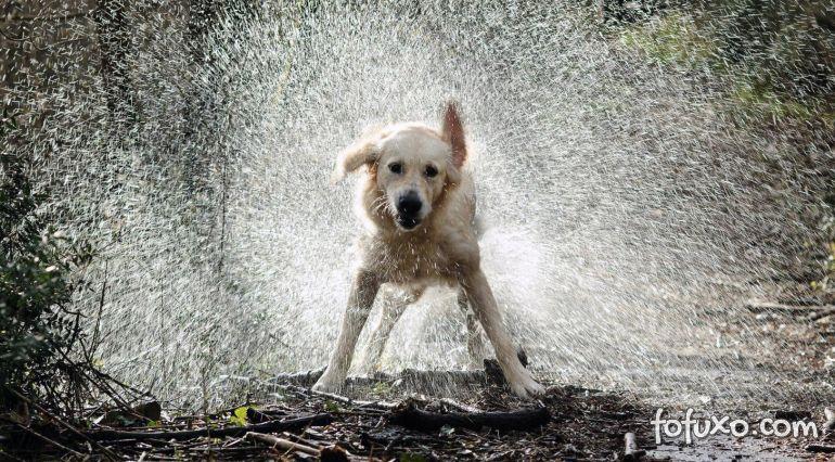 Cachorro pode tomar banho de chuva?