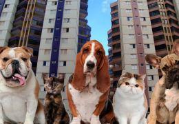 STJ confirma que condomínio não pode proibir animais em residência