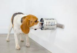 Pesquisadora afirma que cães podem farejar câncer com precisão