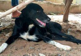 Cachorro na Tailândia é considerado herói depois de salvar bebê