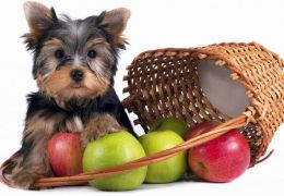5 frutas que os cachorros podem comer
