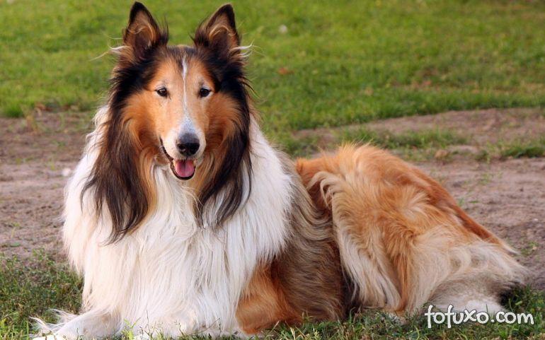 5 Dicas para deixar o pelo do seu cachorro lindo