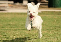 Dicas para quem deseja começar a correr com seu cão