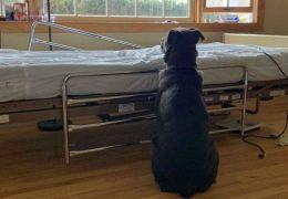 Cachorro permanece ao lado do leito hospitalar depois do dono morrer