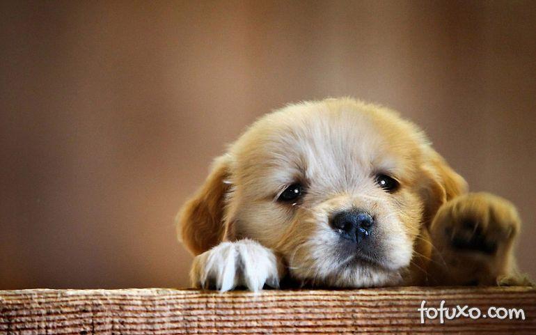 3 atitudes que podem deixar o seu cachorro triste
