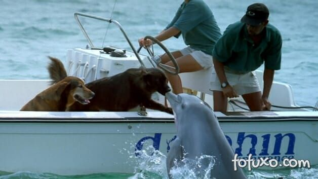 Golfinho é flagrado dando selinho em cachorro