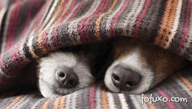 Saiba o que não fazer com cães e gatos no inverno