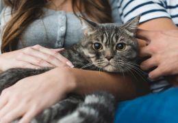 Justiça decide por guarda compartilhada em caso de gato disputado por casal