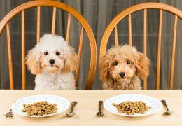 Cachorros podem comer alimentos quentes?