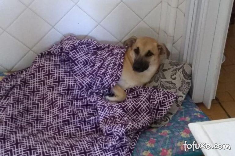 Cachorro destrói quarto da dona e viraliza na internet