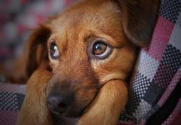 Cachorro com medo de outros cães. Saiba como resolver