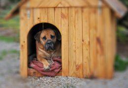 Dicas para proteger a casinha de cachorro durante o inverno