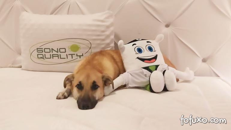 """Cachorro Chico se torna """"embaixador do sono"""" de marca de colchões"""
