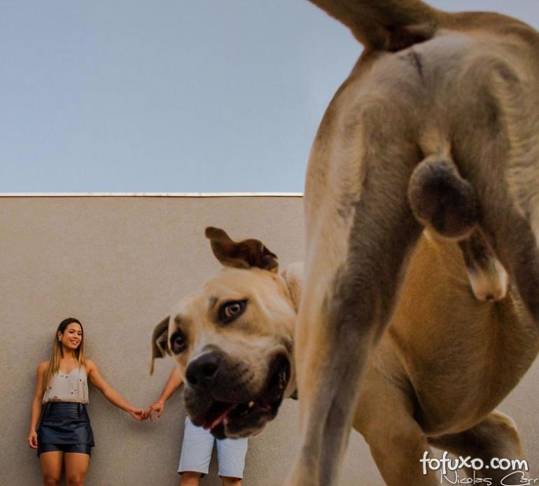 Casal viraliza com cachorro em ensaio pré-casamento