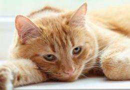 Conheça alguns sinais que podem indicar que seu gato precisa ir ao veterinário