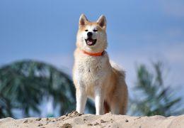 5 raças de cachorros que não se dão bem com outros animais