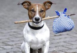 Dicas para evitar que seu cachorro fuja de casa