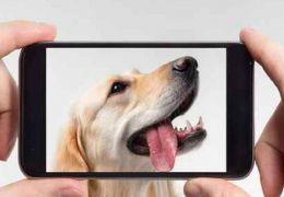 4 aplicativos que ajudam a cuidar do seu pet