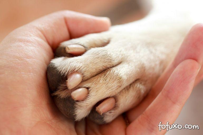 Saiba quando cortar as unhas dos cachorros