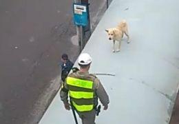 Cachorro é resgatado de cima de parada de ônibus em Porto Alegre