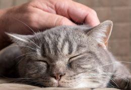 Estudo afirma que gatos são tão apegados quanto cachorros