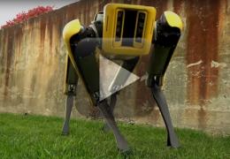 Robô-cachorro começa a ser vendido para empresas