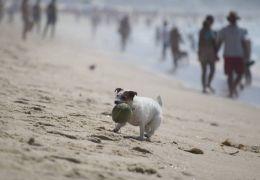 Começa a valer lei que permite cães nas areias das praias do Rio de Janeiro
