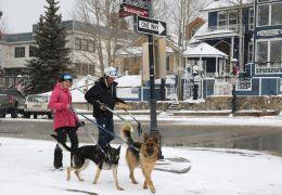 Austrália vai multar dono que não levar cachorro para passear