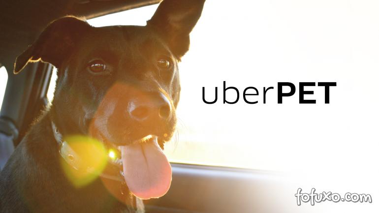 Uber retoma modalidade que permite levar cachorros e gatos no carro