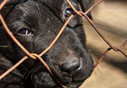 5 formas de ajudar uma ONG de animais