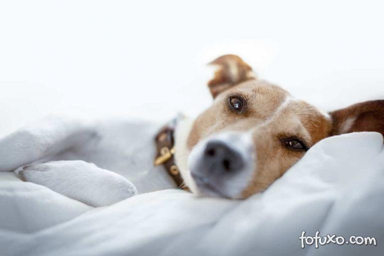 Saiba como identificar o câncer de mama em cachorros