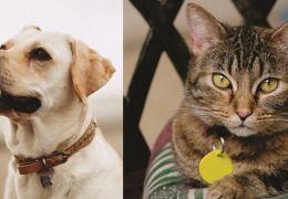 3 motivos para ter uma plaquinha de identificação no seu pet