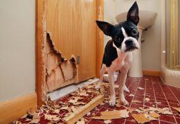 Dicas para gastar a energia dos seus pets dentro de casa