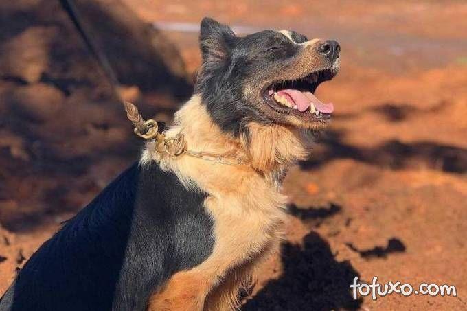 Morre cachorro que ajudou nos resgates em Mariana e Brumadinho