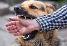 Saiba o que fazer quando for mordido por um cachorro
