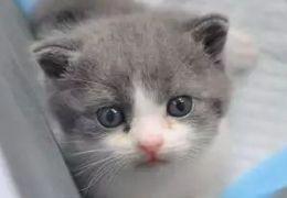 Homem gasta US$ 35 mil para clonar seu gato