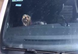 Cachorro é resgatado depois de ficar 1 hora preso dentro de carro