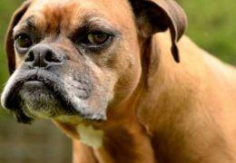 Punições podem deixar cachorros mais pessimistas