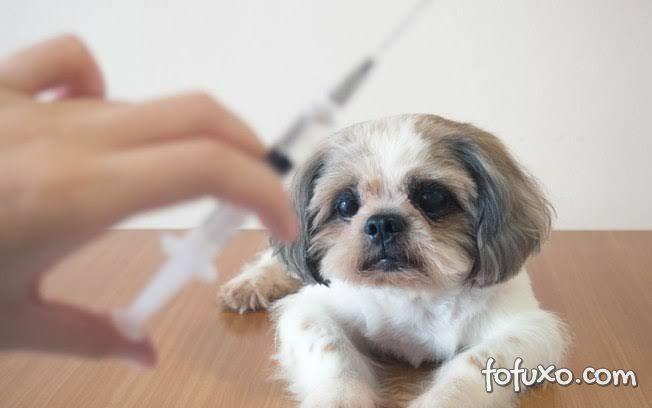 Insulina: Cães podem utilizar o medicamento?