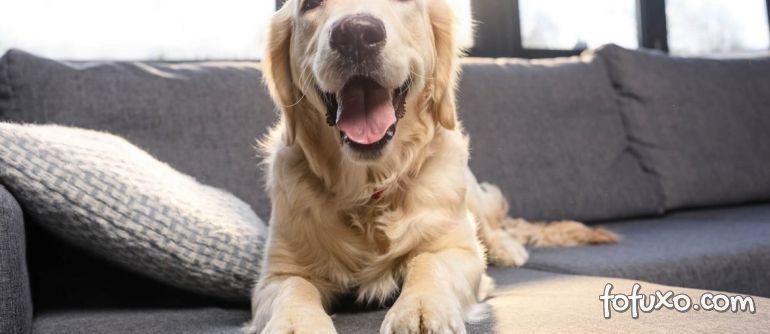 Dicas para ensinar o cachorro a não subir no sofá