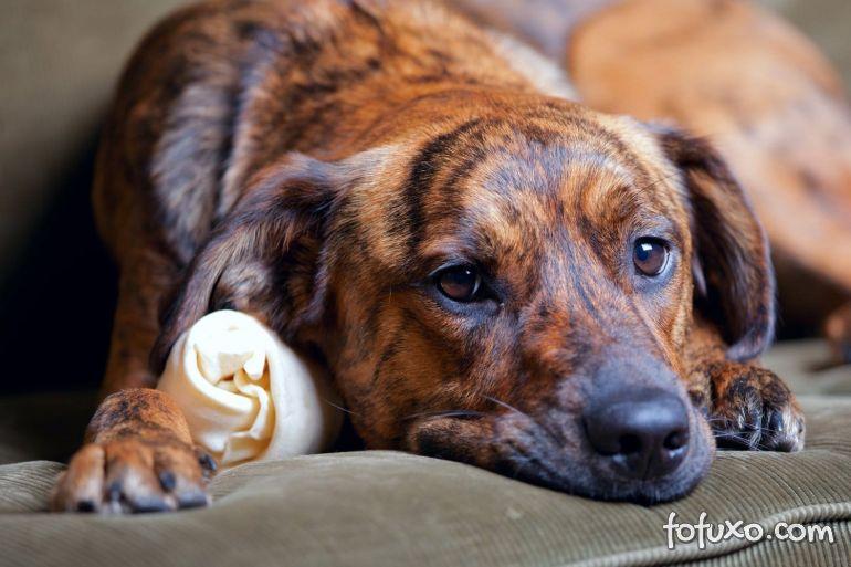 Como ajudar o cachorro a superar um trauma