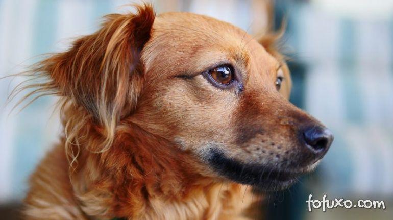 Pesquisadores criam nova fórmula para calcular a idade dos cães