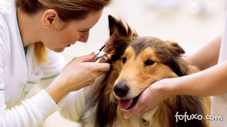 Dicas para limpar a orelha do cachorro da forma correta